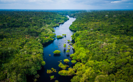 Top 10 Largest forest in the world